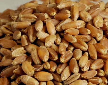 Specificații: 1000 Kernel Greutate: 30-32 Proteine: 11% - 13% Umiditate: 12% Max Deteriorat Nucleele: 0,5% max Material de Externe: 0,5% Max Imperfect cereale: 0,5% Max gluten umed: 26% Min uscat Gluten: 10 % Min dockage: 1-3% Max Radiation: Normal Absorbție de apă: 76% Min